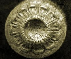 Seclorance - Canin (2008)
